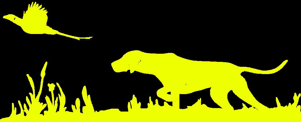 Hundezucht Weimaraner
